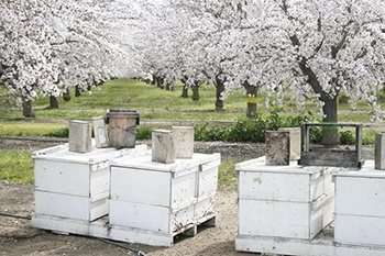 Bee Pollination Trees